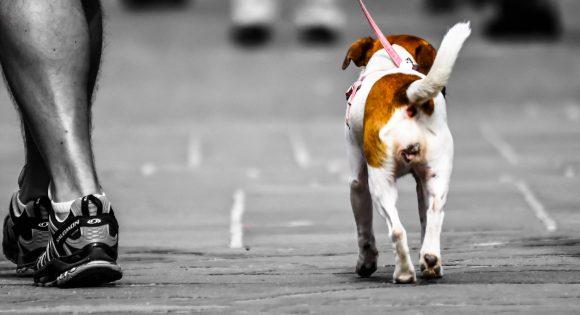 animal-canine-cute-811692